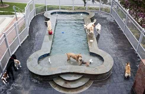 Spa Paws Hotel para gatos y perros